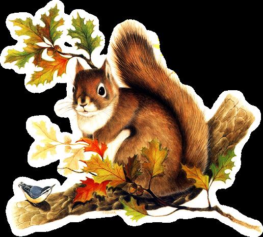 tube écureuil