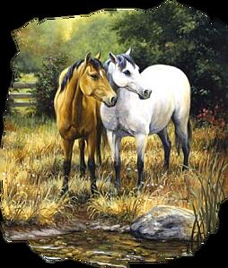 tube chevaux